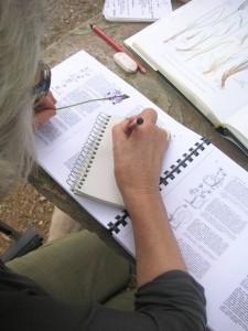 Formation botanique avec Racines de Terriens